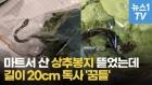 [영상] 마트서 산 상추봉지 뜯었더니...길이 20cm 독사 '꿈틀'