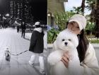 송혜교, 해운대서 여유로운 일상…반려견과 자유롭게 산책