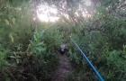 [영상] 낚시꾼 보고 올라온 악어…'먹이' 노리듯 아찔한 추격전