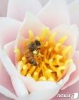 꿀에 취한다