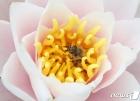꿀벌은 열일 중