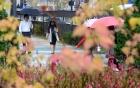 [내일 날씨]전국 흐리고 수도권 낮부터 비…일교차 '10도 이상'